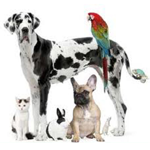 Boarding-pet-daycare-services-dogs-cats-pets-largo-florida