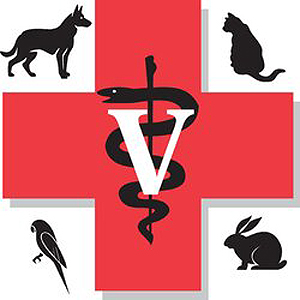 emergency-services-veterinarian-largo-florida