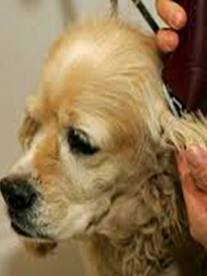 East Bay Animal Hospital grooming