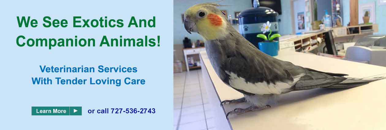 East Bay Animal Hospital - Veterinarian Largo Florida